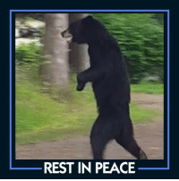 A sad day for the hundreds and thousands of animals lovers who were following the story of Pedals the bear.  The bear that became famous for roaming around New Jersey on his hind legs like a human has been killed during New Jersey hunt.  A hunter shot the bear with a bow and arrow.  The hunter has reportedly been stalking Pedals for three years.: REST IN PEACE A sad day for the hundreds and thousands of animals lovers who were following the story of Pedals the bear.  The bear that became famous for roaming around New Jersey on his hind legs like a human has been killed during New Jersey hunt.  A hunter shot the bear with a bow and arrow.  The hunter has reportedly been stalking Pedals for three years.