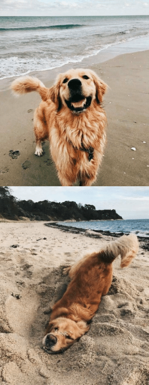 returnsandreturns:  protect-and-love-animals:My first time in the beach @werelibrarian: returnsandreturns:  protect-and-love-animals:My first time in the beach @werelibrarian