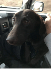 """REUNITED!  This cute dog, found in the Charlotte/Concord area on 1/21, is back home with the family!  """"REUNITED"""": REUNITED!  This cute dog, found in the Charlotte/Concord area on 1/21, is back home with the family!  """"REUNITED"""""""