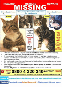 REWARD  REWARD  REWARD  MISSING  ma SearchUK couk UK's Leading Missing Pet Search Service  a Search UK couk  and FREE website  FINN  PIPER  Finn and  Piper  THEY  were last  ARE  seen on  NOT  Tuesday  FROM  19th  THE  AREA  July  SO  2016  WILL BE  LOST  Harrow  AND  Weald  SCARED  HA3.  They are microchipped any vet will scan them free of charge to confirm ownership.  They have been castrated and cannot be used for breeding.  If you see a cat that looks like either of these, please try and take a photo on your  camera or mobile phone so that their owners can see the photo if the cat has gone by  the time they get there.  Do you know anyone who might have started feeding them or adopted a new cat around  the time of their disappearance?  Finn or Piper could have been locked in your shed or garage by accident please check  thoroughly  Drivers, did you see an accident that could have involved Finn or Piper?  0800 4 320 24 hours  QUOTE REF: 259126  7 Days a  week  Call anonymously or email about Finn and Piper. see  n@animalsearchuk.co.uk  twitter  @Animal SearchUK Photograph this, then tweet #findFinnandPiper  facebook  Facebook.com/AnimalSearchUK Photograph this and share THESE 2 SIBLINGS ARE STILL MISSING Piper and her brother, Finn both escaped from a cattery in High Road, Harrow Weald on the evening 19th July 2016.Both are hand reared and are very wary of people they don't know. The cats were in an unfamiliar area so will have appeared lost. It's quite possible someone has found one or both and 'adopted' them in one or two different homes. They have another sibling at home who is missing them very much. If you have any information please call the freephone number on the poster or click on the link to their page on our main website where you can message their owner. https://www.animalsearchuk.co.uk/ALP259126 https://www.animalsearchuk.co.uk/ALP259125
