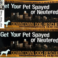 THE ONLY WAY TO HELP DECREASE PET EUTHANASIA ➡ SPAY-NEUTER - PLEASE‼ Repost @noah_mylittleman ・・・ ➡🙏🏻 Please help spread the word - END OVERPOPULATION OF ANIMALS‼️ - Repost from @my_dexy_dex: 📣Let the new year be a better year for our beloved pets. ✅Spay and Neuter your pets and help stop the over population of unwanted animals. ✅If you live or know anyone in the Compton or South Central LA areas please call the number listed (818-407-4145) and the amazing @downtowndogrescue will provide spay and neuter services free of cost via mobile clinics. I've witnessed first hand the effort to help the LA community. ✅Numerous Services are also available for the homeless pet owners on skid row. Please spread the word. ••• spay neuter dogs cats compton southla skidrow downtowndogrescue savelives prolonglives letsstartthenewyearright spayandneuter dog dogs losangeles share repost southcentralla adoptdontshop wagaware woofpackbros socaldogs ladogs: rFr help us stop the overpopulation of unwanted the LA area and al other area  animals i  et Your Pet Spaved  or Neutered  www.downtowndogrescue.org 818.407.41 5  lease help us stop the overpopulation of unwanted animals in the LA area and all other areas  Get Your Pet Spayed  or Neutered  www.downtowndogrescue.org 818.407.414 THE ONLY WAY TO HELP DECREASE PET EUTHANASIA ➡ SPAY-NEUTER - PLEASE‼ Repost @noah_mylittleman ・・・ ➡🙏🏻 Please help spread the word - END OVERPOPULATION OF ANIMALS‼️ - Repost from @my_dexy_dex: 📣Let the new year be a better year for our beloved pets. ✅Spay and Neuter your pets and help stop the over population of unwanted animals. ✅If you live or know anyone in the Compton or South Central LA areas please call the number listed (818-407-4145) and the amazing @downtowndogrescue will provide spay and neuter services free of cost via mobile clinics. I've witnessed first hand the effort to help the LA community. ✅Numerous Services are also available for the homeless pet owners on skid row. Please spread the word. ••• s