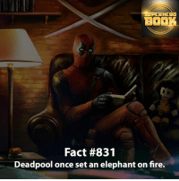 Memes, SpiderMan, and Superhero: RHERO  BOOK  Fact #831  Deadpool once set an elephant on fire. Short Deadpool Fact! Insane!! - marvel superhero facts marvelfacts supervillain rocketracoon spiderman marveluniverse anime marvelstudios xmen jeremyrenner avengers comics mcu marvelart marvelcomics teamcap civilwar teamironman ironman avengers guardiansofthegalaxy logan captainamerica deadpool wolverine captainamericacivilwar ===================================