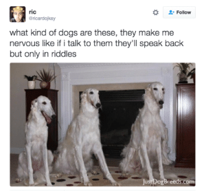 Dogs, Back, and Com: ric  @ricardojkay  Follow  what kind of dogs are these, they make me  nervous like if i talk to them they'll speak back  but only in riddles  JustDogBreeds.com whose dogs is this