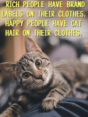 Clothes, Memes, and Hair: RICH PEOPLE HAVE BRAND  LABELS ON THEIR CLOTHES  HAPPY PEOPLE HAVE CAT  HAIR ON THEIR CLOTHES Fact <3