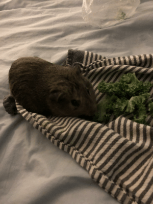 Rico's back with more kale: Rico's back with more kale