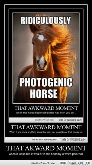 That Akward Momenthttp://omg-humor.tumblr.com: RIDICULOUSLY  PHOTOGENIC  HORSE  THAT AWKWARD MOMENT  when this horse had much better hair then you do.  TASTE OF AWESOME.COM  Like this? You'll hate  THAT AWKWARD MOMENT  When if you knew anything about horses, you would know that one is fat  The #2 most addicting site  TASTE OF AWESOME.COM  THAT AKWARD MOMENT  when it looks like it was hit in the head by a white paintball  TASTE OF AWESOME.COM  Like this? You'll hate That Akward Momenthttp://omg-humor.tumblr.com