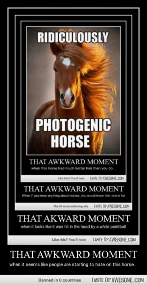 That Awkward Momenthttp://omg-humor.tumblr.com: RIDICULOUSLY  PHOTOGENIC  HORSE  THAT AWKWARD MOMENT  when this horse had much better hair then you do.  TASTE OFAWESONE.COM  Like this? You'l hate  THAT AWKWARD MOMENT  When if you knew anything about horses, you wouid know that one is fat  TASTE OF AWESOME.COM  The #2 most addicting site  THAT AKWARD MOMENT  when it looks like it was hit in the head by a white paintbal  TASTE OF AWESOME.COM  Like this? Youll hate  THAT AWKWARD MOMENT  when it seems like people are starting to hate on this horse...  TASTE OF AWESOME.COM  Banned in 0 countries That Awkward Momenthttp://omg-humor.tumblr.com