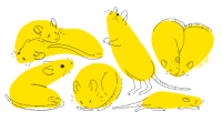 riibrego: how to draw a ratstep 1: draw any shapestep 2: congrats: riibrego: how to draw a ratstep 1: draw any shapestep 2: congrats