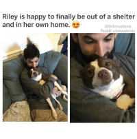 Memes, Reddit, and Happy: Riley is happy to finally be out of a shelter  and in her own home.  @DrSmashlove  Reddit u/sweeeenay (@dogsbeingbasic) is my favorite dog account on IG!