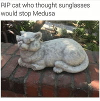 "Memes, Http, and Sunglasses: RIP cat who thought sunglasses  would stop Medusa <p>I think my cat got stoned via /r/memes <a href=""http://ift.tt/2DmqRih"">http://ift.tt/2DmqRih</a></p>"