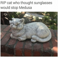 it was a bold strategy: RIP cat who thought sunglasses  would stop Medusa it was a bold strategy