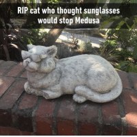 Sunglasses, Thought, and Irl: RIP cat who thought sunglasses  would stop Medusa Me_irl