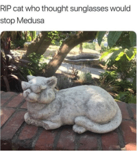 Dude, Sunglasses, and Peace: RIP cat who thought sunglasses would  stop Medusa Rest in peace my dude