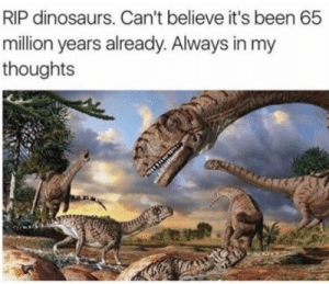 Dinosaurs, Been, and Believe: RIP dinosaurs. Can't believe it's been 65  milion years already. Always in my  thoughts