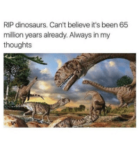 Memes, Dinosaurs, and Been: RIP dinosaurs. Can't believe it's been 65  million years already. Always in my  thoughts Feels like yesterday