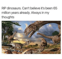 Memes, Dinosaurs, and Been: RIP dinosaurs. Can't believe it's been 65  million years already. Always in my  thoughts Its been that long, it feels like yesterday