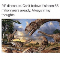Friends, Memes, and Dinosaurs: RIP dinosaurs. Can't believe it's been 65  million years already. Always in my  thoughts Dm to 7 friends for a follow back 💯