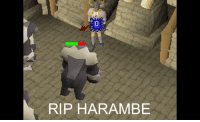 THE PHOTO THEY DON'T WANT YOU TO SEE: RIP HARAMBE THE PHOTO THEY DON'T WANT YOU TO SEE