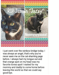"""RIP """"Jazzy"""" Submitted by @kcluvbug cat cats catsofinstagram kitten kittens kitty kitties funny dog fun dogs dogsofinstagram doggy doggie doggies funnydog pets gato petsofinstagram animal cute puppies pup puppy katze puppiesofinstagram cat_shaming funnyanimal pet kittensofinstagram: RIP Jasmin Jazzy  Nnnnyyyyaaaa!  I just went over the rainbow bridge today. I  was always an angel, that's why you've  never seen me on the cat-shaming page  before. I always had my tongue out and  that orange spot on my head was my  favorite lovies spot! l waited for my  mommy and daddy to come home before  leaving this world so that we could say  good-bye. RIP """"Jazzy"""" Submitted by @kcluvbug cat cats catsofinstagram kitten kittens kitty kitties funny dog fun dogs dogsofinstagram doggy doggie doggies funnydog pets gato petsofinstagram animal cute puppies pup puppy katze puppiesofinstagram cat_shaming funnyanimal pet kittensofinstagram"""