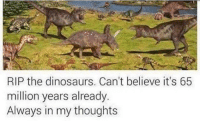 Dinosaurs, Dank Memes, and Believe: RIP the dinosaurs. Can't believe it's 65  million years already.  Always in my thoughts