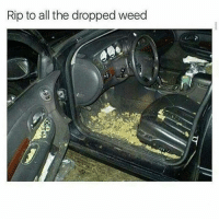 Memes, Weed, and 🤖: Rip to all the dropped weed