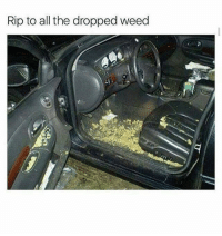 Memes, 🤖, and The Drop: Rip to all the dropped weed