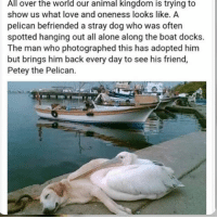 AWW - - follow my personal @fml_jade • • { tumblr tumblrpost tumblrtextpost funny tumblrfunny funnytumblr comedy weird memes relatable af fandoms instagood follow cute love bill_wi_the: rld over the world our animal kingdom is trying to  show us what love and oneness looks like. A  pelican befriended a stray dog who was often  spotted hanging out all alone along the boat docks.  The man who photographed this has adopted him  but brings him back every day to see his friend,  Petey the Pelican. AWW - - follow my personal @fml_jade • • { tumblr tumblrpost tumblrtextpost funny tumblrfunny funnytumblr comedy weird memes relatable af fandoms instagood follow cute love bill_wi_the