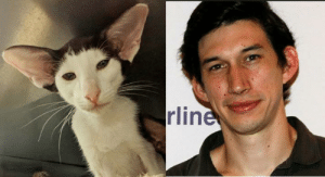 Found our cat's Doppelganger.: rline Found our cat's Doppelganger.