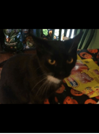 Friday, Memes, and Lost: RMET Lost cat Cohoes.....Columbia st ex  Please spread the word.  Missing sen Friday November 9 Please help find Lost male cat from Columbia st ex answers to the name of pesty please contact 5186086152 or 5188017733