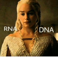 Memes, 🤖, and Dna: RNA  DNA