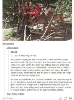 Can anyone confirm this?advice-animal.tumblr.com: rnememaker:  zooophagous:  day-trip:  So I'm assuming he won.  Well, there's nothing for him to have won. These bloodied antlers  aren't the result of a fight. See, deer lose their antlers and grow new  ones every year. When they grow new antlers, the new antlers are  covered in a fine, fuzzy skin called velvet. When the time comes for  the antlers to stop growing and become hard and sharp. the velvet  becomes very uncomfortable and the deer rub their antlers on rough  surfaces like trees to scrape it off.  Because antler is bone, and because the velvet that helps them grow  is very blood-rich, bucks who have recently shed their velvet look very  gory! Not to worry though, this is all perfectly natural and soon the  dead skin and blood will go away and leave behind a magnificent set  of mature antlers, just in time for the autumn mating season.  deers metal as fuck  66,530 notes Can anyone confirm this?advice-animal.tumblr.com