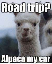 LOL!!: Road trip  Alpaca my car LOL!!