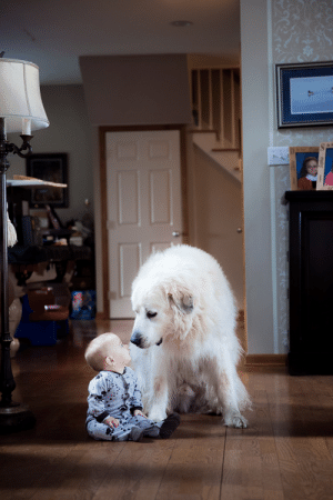 My 7 month old son was sitting playing when my wife's Great Pyreneese walked up and sat beside him. One of the greatest moments that I'm thankful to have captured!: roadas My 7 month old son was sitting playing when my wife's Great Pyreneese walked up and sat beside him. One of the greatest moments that I'm thankful to have captured!