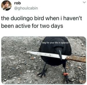 Life, Spanish, and Been: rob  @ghoulcabin  the duolingo bird when i haven't  been active for two days  beg for your life in spanish  i: