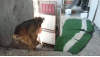 Tumblr, Blog, and Heart: robeblr:  yung-penis:  gif87a-com:  Everyday he waits for his owner.  im gonna hav a heart attack   Do. It. For . Him.