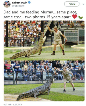 Steve and Robert Irwin photo recreation. ❤️🐊: Robert Irwin  Follow  @Robertirwin  Dad and me feeding Murray... same place,  same croc two photos 15 years apart Steve and Robert Irwin photo recreation. ❤️🐊