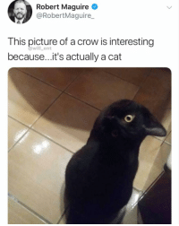 Memes, Mind, and 🤖: Robert Maguire  @RobertMaguire  This picture of a crow is interesting  because...it's actually a cat  @will ent Mind blown