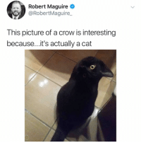 Memes, Hell, and 🤖: Robert Maguire  @RobertMaguire  This picture of a crow is interesting  because...it's actually a cat Post 1458: y the hELL havent u followed @kalesaladanimals yet
