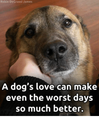 Truth. <3: Robin DeGrassi James  A dog's love can make  even the worst days  so much better. Truth. <3