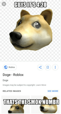 Imagine if DOGE Funny Dog Used for Maymay Was Roblox Wow Such Blox