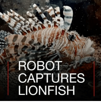 11 JUL: Lionfish are being hunted by an unlikely predator at sea - a robot. Video courtesy: RSE More: bbc.in-lionfish lionfish conservation Bermuda RSE Environment Oceanography Sealife Ocean Robot Technology Tech Science @RobotsISE BBCShorts BBCNews @BBCNews ​​​: ROBOT  CAPTURES  LIONFISH 11 JUL: Lionfish are being hunted by an unlikely predator at sea - a robot. Video courtesy: RSE More: bbc.in-lionfish lionfish conservation Bermuda RSE Environment Oceanography Sealife Ocean Robot Technology Tech Science @RobotsISE BBCShorts BBCNews @BBCNews ​​​