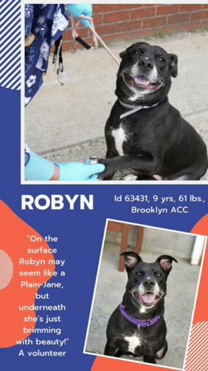 "Being Alone, Apparently, and Cats: ROBYN ld aso? r ctis  Id 63431, 9 yrs, 61 lbs.,  Brooklyn ACC  On the  surface  Robyn may  seem like a  Plain-Jane,  ut  underneath  she's just  brimming  with beauty!  A volunteer TO BE KILLED 6/15/19.   She's a sweet, super wiggly, senior lady with a nub of a tail, and a heart as big as the world. Don't wait – save her life now! ROBYN is lovely.  <3  A volunteer writes: ""On the surface Robyn may seem like a Plain-Jane, but underneath she's just brimming with beauty! She greeted me with a full-body wiggle and the sweetest little face. And watching her little nub of a tail flipping back and forth as I scratched her back was just the cutest thing! She leaned into me as I petted her, and showed her appreciation with lots of kisses. At just the sight of a treat she immediately sat down (without me even asking!) and took them very gently. And when she saw it was the end of treat-time, she took it up a notch and offered me her paw! (Yes, it worked and I gave her a few more). Robyn may be greying around the muzzle, but she walks at a brisk pace and has a medium to high energy level. She's housebroken too! Robyn would do well in an adult-only home and as the only furry member of the family, as she can be fearful of both young children and dogs. This little wiggle-bug would make a great companion, so come and meet her at the Brooklyn ACC shelter where she's excitedly awaiting her fur-ever home."" Please hurry and message our page or email us at MustLoveDogsNYC@gmail.com for assistance fostering or adopting this sweet, wiggly lady.  ROBYN, ID# 63431, 9 yrs old, 61.5 lbs, Spayed Female Brooklyn ACC, Large Mixed Breed, Black / White  Owner Surrender Reason: owner moving to a new location that does not allow pets Shelter Assessment Rating: LEVEL 3 No children (under 13) Single-pet home Recommend no dog parks Medical Behavior Rating: Yellow  OWNER SURRENDER NOTES - BASIC INFORMATION: Robyn is an approx 9 year old black and white female large dog whose owner got her from a friend and that was surrendered to BACC due to owner moving to a new location that does not allow pets. She previously lived with 2 adults. Robyn is shy for a few minutes around strangers but will warm up with time She is fearful of children and will bark at strollers that pass by. Robyn has not lived with dogs, however with passing them on the street she is described as fearful of dogs and will bark when a dog passes by. Robyn has not been around cats either, it is unknown how she would react. She has no reported resource guarding and will respond to ""stop"" for a treat, her food, or toy to be taken away. Robyn has no bite history: She is housetrained and her previous owner describes her energy level as high.   Other Notes: Robyn is scared of sudden or loud noises where she would bark at what scares her. Robyn is not bothered f she was moved from the furniture, being held or restrained, or when her sleep is interrupted. Robyn is afraid of being given a bath or having her coat brushed. It is unknown how she would react if someone were to touch her paws. Robyn would bark if someone unfamiliar approaches the house and is afraid if someone approaches the family member.   For a New Family to Know Robyn is described as friendly, affectionate, fearful, and anxious. Robyn will follow someone around or be in the same room as them when someone is home. Robyn will play with balls or Kong toys and she does not play any games. Robyn has been kept mostly indoors and will sleep on her doggy bed. Robyn has been fed mostly dry food and wet food twice a month as a treat. She is fed twice a day. Robyn is house trained and will use the potty on any surface outside. Robyn will sometimes bark or whine when left home alone. Robyn does not do well in a crate and will bark, whine, and attempt to get out. Robyn understands how to sit but will listen to that que occasionally. Robyn will go either on a slow walk or a brisk walk and she pulls very hard on the leash. Robyn will run away when off the leash.   INTAKE NOTES – DATE OF INTAKE, 05-20-2019: Behavior during intake: Robyn had a tense body but would be loose and wiggly when a treat were given to her. Robyn would tense up when someone new were to walk into the room but then would approach and allow for petting. Robyn allowed for counselor to place a leash around her and walked out of the room with no issues.  BEHAVIOR NOTES   Means of surrender (length of time in previous home): Owner surrender Previously lived with: 2 Adults Behavior toward strangers: Initially shy, but warms up Behavior toward children: Fearful (w/passing children during walks) Behavior toward dogs: Fearful, barks (w/dogs encountered on walks) Behavior toward cats: Unknown Resource guarding: None reported Bite history: None reported Housetrained: Yes Energy level/descriptors: Robyn is described as friendly, affectionate, fearful and anxious with a high level of energy.  SHELTER ASSESSMENT SUMMARIES - Behavior Assessment Date: 5/22/2019  Summary:  Leash Walking Strength and pulling: Mild pulling Reactivity to humans: None Reactivity to dogs: None Leash walking comments:  Sociability Loose in room (15-20 seconds): Soft and loose, panting, tail wagging, stays near handlers, readily accepts treats with soft mouth, solicits attention, accepts contact, some lip licking, jumps up soliciting attention, barked once at dogs passing outside the room Call over: Approaches readily, soft and loose Sociability comments:   Handling  Soft handling: Soft, loose and wiggly, some lip licking, sits down and then lays down to expose her belly, soft head flips, leans into and accepts all contact Exuberant handling: Soft, loose and wiggly, sits down, leans into and accepts all contact Handling comments:  Arousal Jog: Follows handler, soft and loose; Somewhat engages in play Arousal comments: Jumps up and mouths leash after third pass, but settles immediately on her own  Knock Knock Comments: No response to knock; Pulls toward door seeking exit as assistant enters  Toy Toy comments: Grips and relinquishes; Understands the cue for ""drop it""  PLAYGROUP NOTES - DOG TO DOG SUMMARIES: According to Robyn's previous owner, she has not lived with dogs, however, when passing them on the street she is described as fearful and will bark when a dog passes by.  5/21: When off leash at the Care Center, Robyn is introduced to a novel male. Upon entering the pen, she is fearful with her tail tucked, ears pinned back, and whale eyes. When she sees the male she backs away from the gate and hard barks. Due to Robyn's fearful behavior, an off-leash interaction is not conducted.   5/22: Robyn was muzzled for today's interaction. She displayed the same aforementioned behaviors at the gate again with the addition of freezing. Her leash was held and when the male approached she freezes again, growls, whips her head around and snaps. Robyn is separated from the male and the session is ended.  FUN FACTS:  Summary (1): Understands the cue for ""drop it.""  INTAKE BEHAVIOR: Date of intake: 20-May-2019 Summary: Initially tense, readily accepted treats then displayed loose and wiggly body, accepted contact  MEDICAL BEHAVIOR: Date of initial: 20-May-2019 Summary: Readily approaches handlers; Growled and hard barked toward dogs nearby; Muzzled as a precaution  ENERGY LEVEL: Robyn has been observed to exhibit a medium-high level of energy during her interactions in the care center. We cannot be certain of her behavior in a home environment, but we recommend that she be provided daily mental and physical stimulation as an outlet for her energy.  BEHAVIOR DETERMINATION: Level 3 Behavior Asilomar TM - Treatable-Manageable  Recommendations:  No children (under 13) Single-pet home Recommend no dog parks  Recommendations comments:  No children (under 13): Due to Robyn's previous owner reporting her to exhibit fearful behavior with the potential for defensive aggression, we feel it would be best for her to be placed in a stable, adult-only home environment. It is advised that the new adopters should be able to exercise appropriate and safe management when handling Robyn, allowing her to acclimate and decompress at her own pace. Force-free, reward-based training only is advised when introducing or exposing Robyn to new and unfamiliar situations, as well as utilizing guidance from a qualified, professional trainer/behaviorist.  Single-pet home/Recommend no dog parks: Due to the concerning behaviors that Robyn has shown during playgroup (see DOG-DOG BEHAVIOR SUMMARY) and that was noted in the previous home, we feel that Robyn should not visit dog parks and be the only resident dog. The Behavior Department recommends that she be socialized in a more controlled setting until her behavior towards other dogs can be further addressed. Reward-based, force-free training can be utilized to help Robyn associate dogs with things she enjoys like toys or treats.  Potential challenges: Fearful/potential for defensive aggression  Potential challenges comments: Fearful/potential for defensive aggression: Previous owner reported Robyn to be easily startled by loud noises, children and dogs, displaying fearful behavior that has been observed to escalate to growling or barking. This behavior has not been observed during her interactions in the care center. Should these behaviors arise in a home environment, please refer to the handout on Fearful/potential for defensive aggression.  MEDICAL EXAM NOTES   23-May-2019  Progress Exam H: CIRDC signs seen on rounds S: BAR, consistent coughing, no sneezing, no vd. Eyes: Unremarkable OU Ears: Unremarkable AU. Nasal Cavity: Mild serous nasal discharge  Lungs: Eupneic U/G: Normal external genitalia. No discharge. Musculoskeletal: Ambulatory x 4 with no appreciable lameness.  BCS = 5/9 Neuro: Appropriate mentation.  Rectal: Not performed. Externally normal. Assessment 1)CIRDC  Plan:  Move to iso, start enrofloxacin 10 mg/kg PO SID x 10 days  20-May-2019  DVM Intake Exam Estimated age: 9 yo per owner Microchip noted on Intake? neg Microchip Number (If Applicable): History :o/s Subjective: barh Observed Behavior - Readily approaches handler, little restrain needed. Dog reactive. Needed muzzle after hearing/ seeing dog go by.  Evidence of Cruelty seen -n Evidence of Trauma seen -n Objective  T = P = 120 R =eup BCS= 7/9 EENT: Eyes clear, ears clean, no nasal or ocular discharge noted Oral Exam: tooth wear and mod staining PLN: No enlargements noted H/L: NSR, NMA, CRT < 2, Lungs clear, eupnic ABD: Non painful, no masses palpated U/G: FS, no mgt's MSI: Ambulatory x 4, skin free of parasites, no masses noted, healthy hair coat, obese CNS: Mentation appropriate - no signs of neurologic abnormalities Rectal: Assessment Senior FS large breed - apparently healthy Prognosis: Good Plan: Routine intake Already spayed  *** TO FOSTER OR ADOPT ***  HOW TO RESERVE A ""TO BE KILLED"" DOG ONLINE (only for those who can get to the shelter IN PERSON to complete the adoption process, and only for the dogs on the list NOT marked New Hope Rescue Only). Follow our Step by Step directions below!   *PLEASE NOTE – YOU MUST USE A PC OR TABLET – PHONE RESERVES WILL NOT WORK! **   STEP 1: CLICK ON THIS RESERVE LINK: https://newhope.shelterbuddy.com/Animal/List  Step 2: Go to the red menu button on the top right corner, click register and fill in your info.   Step 3: Go to your email and verify account  \ Step 4: Go back to the website, click the menu button and view available dogs   Step 5: Scroll to the animal you are interested and click reserve   STEP 6 ( MOST IMPORTANT STEP ): GO TO THE MENU AGAIN AND VIEW YOUR CART. THE ANIMAL SHOULD NOW BE IN YOUR CART!  Step 7: Fill in your credit card info and complete transaction   HOW TO FOSTER OR ADOPT IF YOU *CANNOT* GET TO THE SHELTER IN PERSON, OR IF THE DOG IS NEW HOPE RESCUE ONLY!   You must live within 3 – 4 hours of NY, NJ, PA, CT, RI, DE, MD, MA, NH, VT, ME or Norther VA.   Please PM our page for assistance. You will need to fill out applications with a New Hope Rescue Partner to foster or adopt a dog on the To Be Killed list, including those labelled Rescue Only. Hurry please, time is short, and the Rescues need time to process the applications."