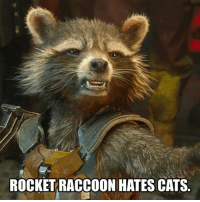 Comment a cat emoji. - - • marvel marvelcomics comiccon hero rocketraccoon guardiansofthegalaxy heroforhire spidermanhomecoming spiderman: ROCKET RACCOON HATES CATS Comment a cat emoji. - - • marvel marvelcomics comiccon hero rocketraccoon guardiansofthegalaxy heroforhire spidermanhomecoming spiderman