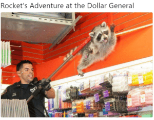 Marvel is going low budget with its next flick.: Rocket's Adventure at the Dollar General Marvel is going low budget with its next flick.