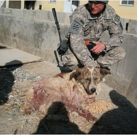 Memes, Rocky, and Soldiers: Rocky, a stray dog in Afghanistan, heroically saved US soldiers from suicide bomber. He survived the blast and was later rescued and taken back home with one of the men he saved.🇺🇸 https://t.co/OF7DnNn2iz
