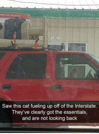 Saw, Back, and Got: ROclean Gasolines  NO  LOITERING  SLE  Saw this cat fueling up off of the Interstate.  They've clearly got the essentials  and are not looking back Grabbing just the essentials
