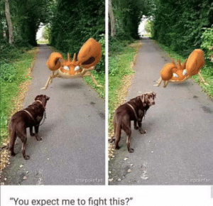 """omg-humor:  Don't you good-boy me: roepokefan  trucpokefan  """"You expect me to fight this?"""" omg-humor:  Don't you good-boy me"""