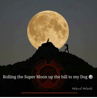 Memes, Moon, and The Hills: Rolling the Super Moon up the hill to my Dog  Weird World