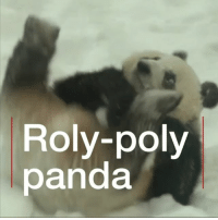 """Love, Memes, and China: Roly-poly  panda Giant pandas perform roly-polys in the snow in Finland. They arrived at Ähtäri Zoo in January on a 15 year loan from China. The pandas have been given Finnish names, Pyry (""""Snowfall"""") and Lumi (""""Snow""""), which given their new love for the white stuff seems entirely appropriate. panda snow finland zoo bbcnews"""