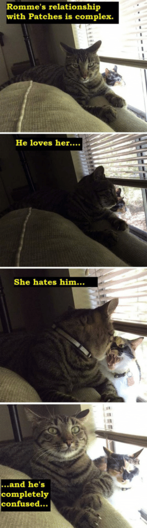 Complex, Confused, and Tumblr: Romme's relationship  with Patches is complex.  He loves her....  She hates him...  ...and he's  completely  confused... srsfunny:Confusing Relationship